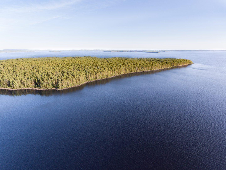 Jarjestot Yrittavat Estaa Metsahallituksen Hakkuut Arvokkailla