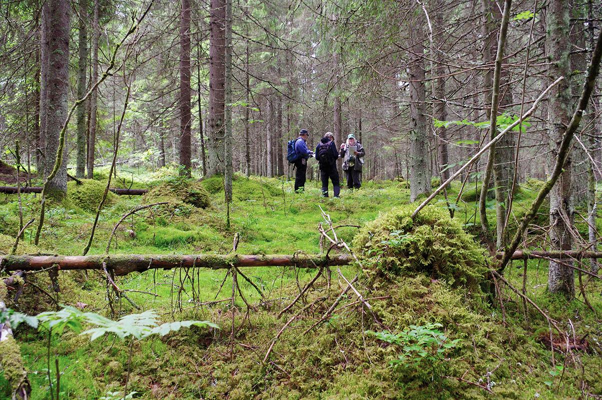 Tapani Veistola tarkastamassa tulevaa luonnonsuojelualuetta. Kuva  Tapani  Veistola ed2879c810