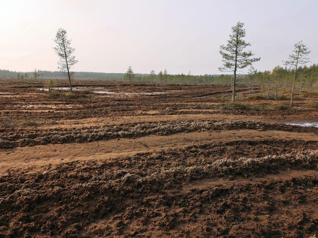 Rahkasammalen nosto on tuhonnut Sarvinevan pinnan