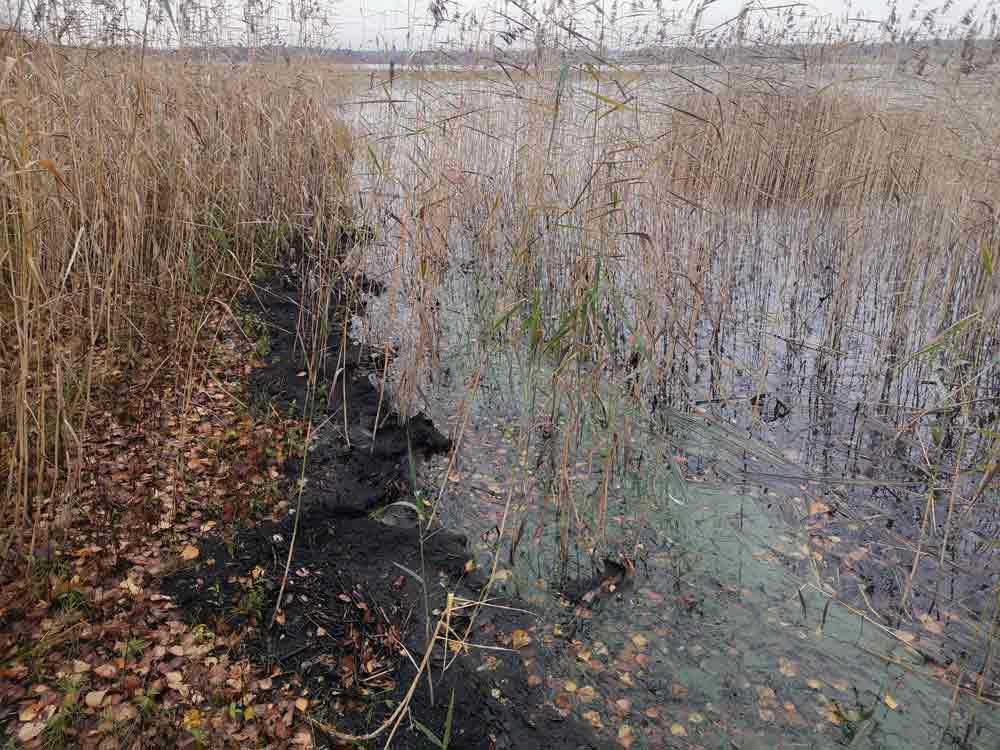 Vesirajaan kertynyttä detritusta Etelä-Pohjanmaalla sijaitsevan järven rannassa.