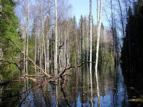 Tapiolan suojelumetsä Poosjärvi. Kuva: Raimo Hakila