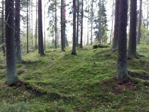 metsäjooga kerava