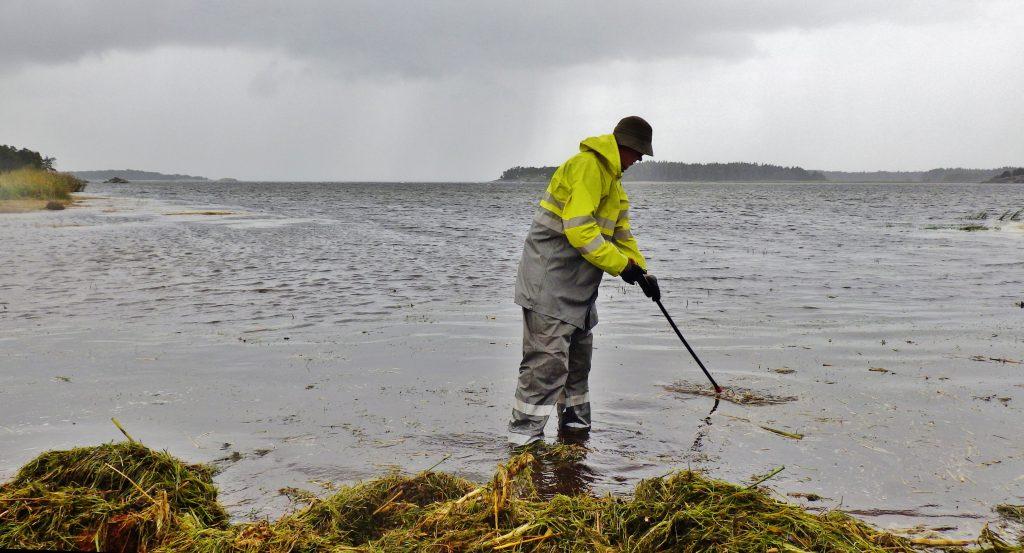 Hangon rantojen siivousta