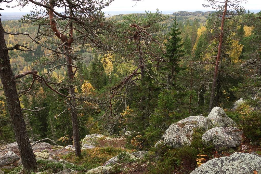 Pisa Kuopion Luonnon Ystavain Yhdistys