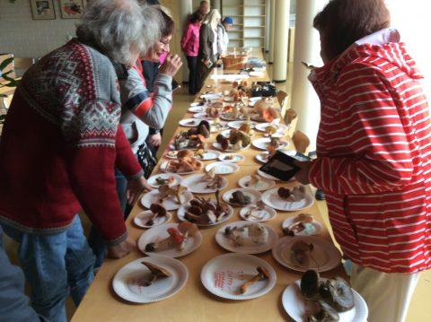 Syksyn 2018 sieninäyttelymme Nilsiän virastotalolla, kuvaaja Mauri Tiainen