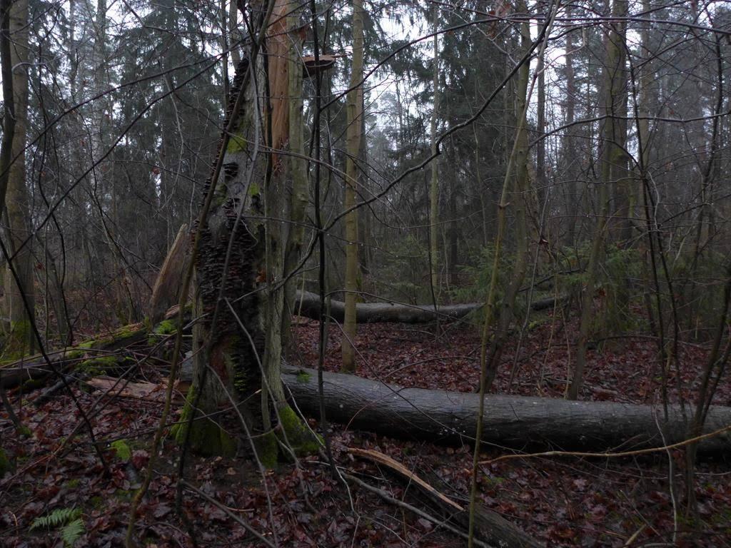 Helsingin Luonnonsuojeluyhdistys