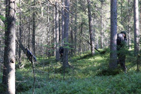 luontokoulu metsässä