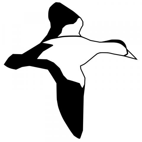 Raaseporin Luonto ry logo
